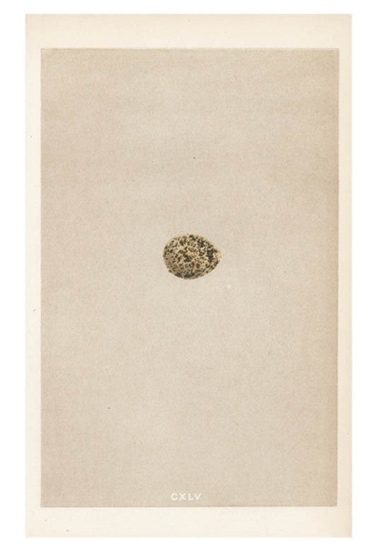Brown Speckled Egg Print, c. 1876