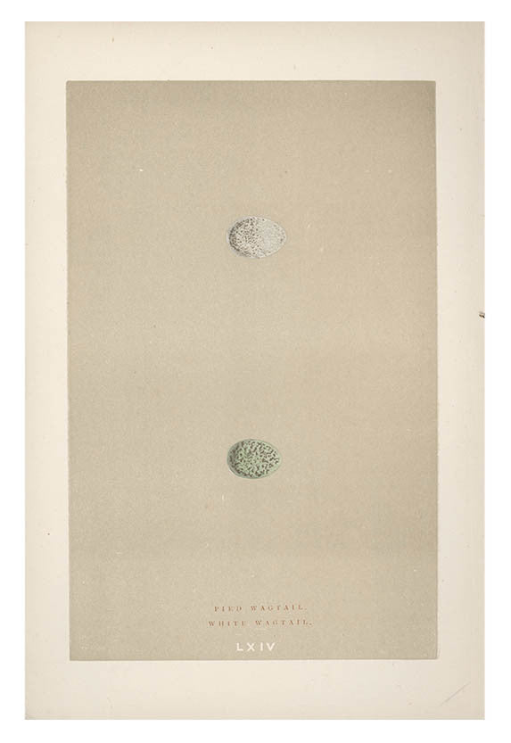 Small Double Egg Print, c. 1876