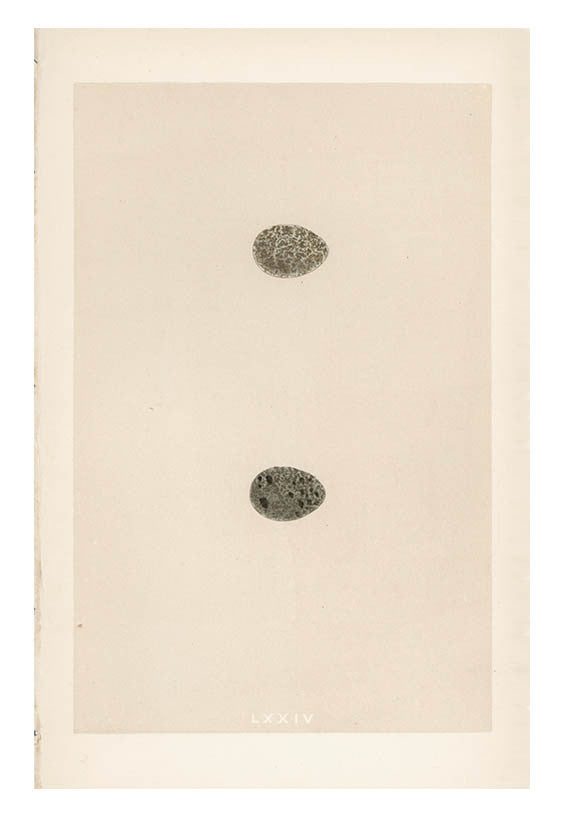 Double Speckled Egg Print, c. 1876