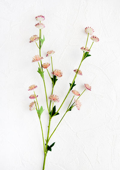 Realistic faux flower stem with pale pink astrantia flowers