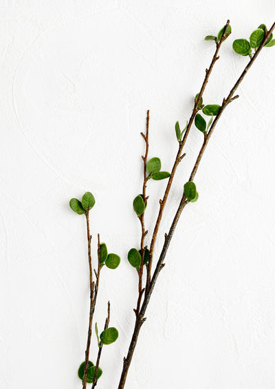 A realistic looking faux branch with small green leaves.