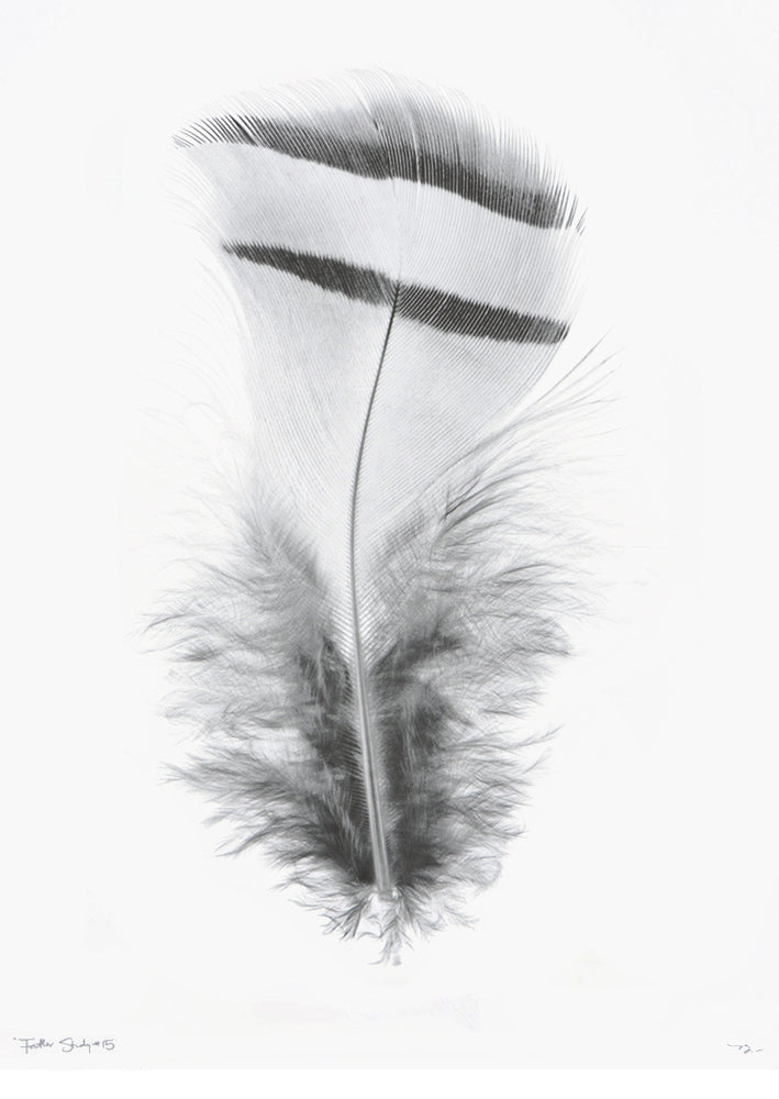 1: Feather Study #15 Print in  - LEIF