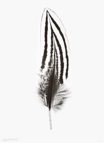 Feather Study #2 Print