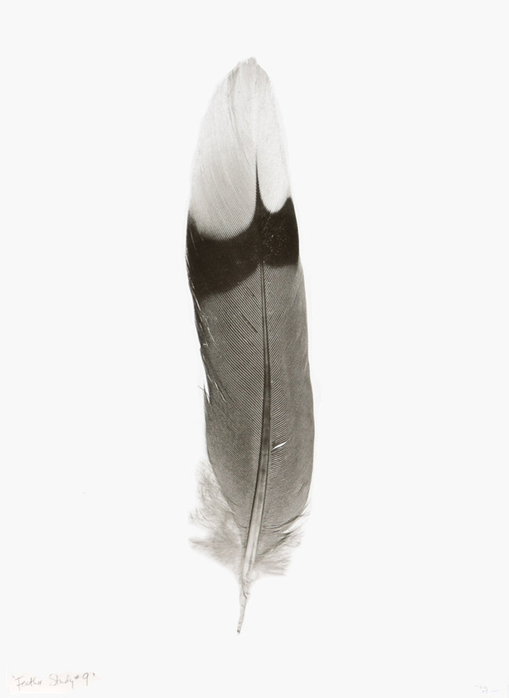 1: Feather Study #9 Print in  - LEIF