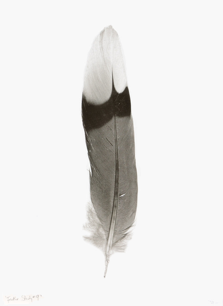 Feather Study #9 Print - LEIF