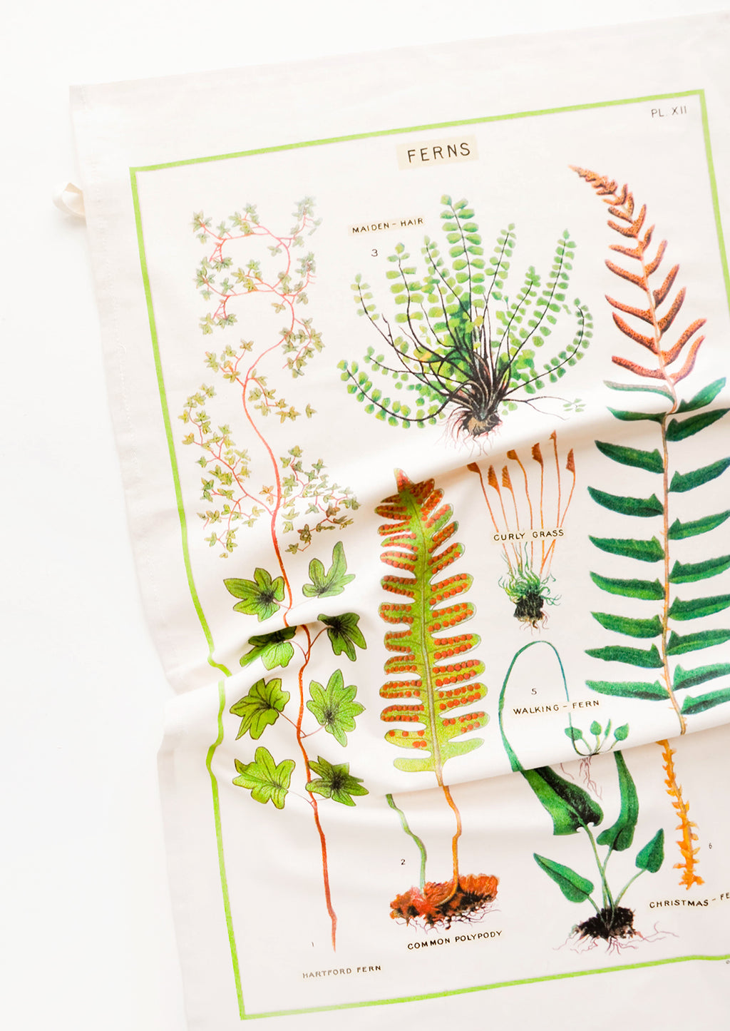 1: A cotton tea towel with botanical fern species printed in color.