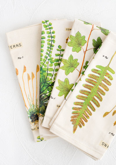 Fern Species Napkin Set