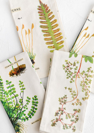 Fern Species Napkin Set hover