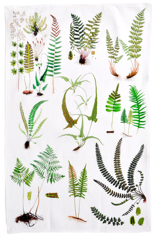 1: Ferns Tea Towel in  - LEIF