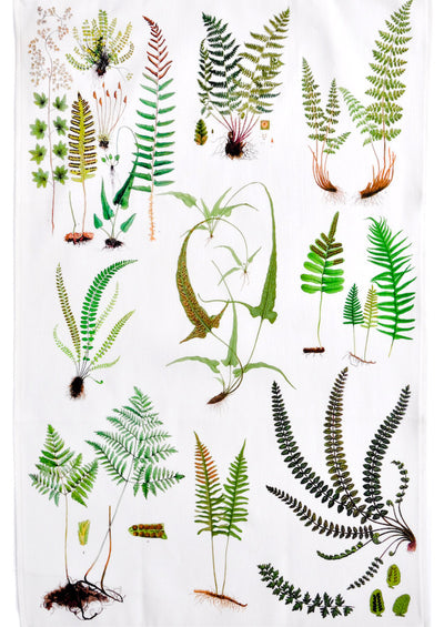 Ferns Tea Towel in  - LEIF