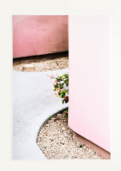 An art photograph depicting a small flowering pant peeking out from behind a pink wall.