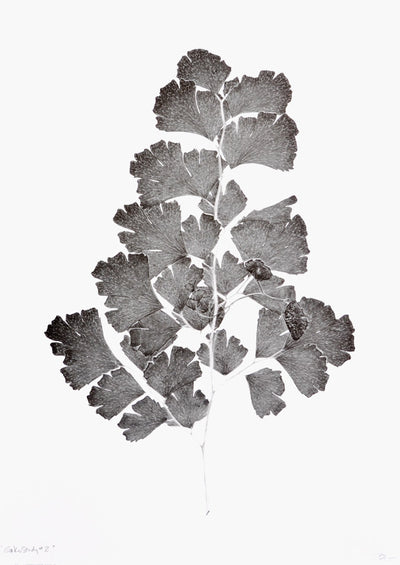 Gingko Study #2 Print in  - LEIF