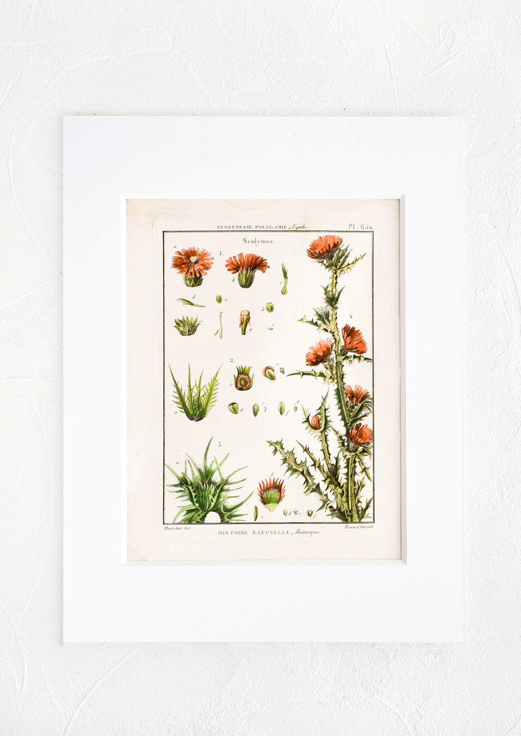 1: Vintage botanical print with white mat. Print features green and coral leaves and flowers.