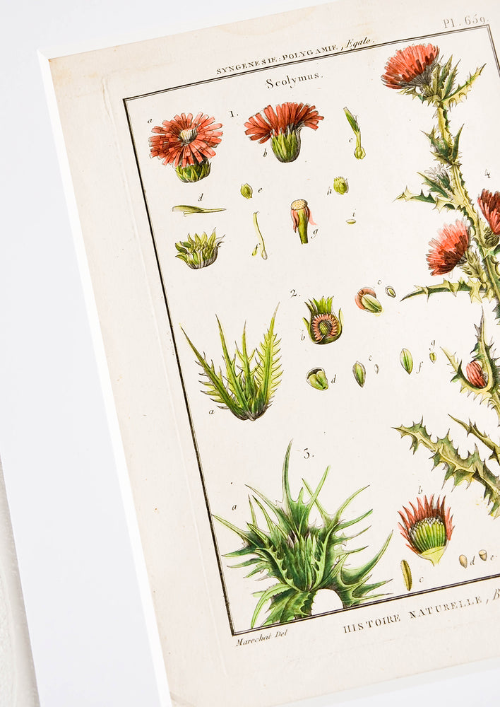 2: Vintage botanical art print in white mat