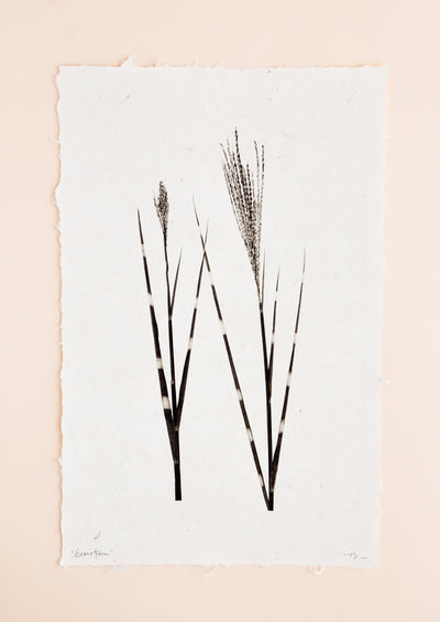 Grass Form Sepia Print in  - LEIF