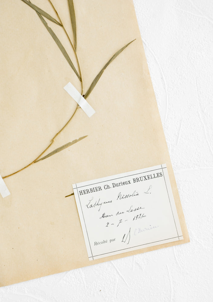 2: Old dried floral specimen preserved and taped to paper with descriptive bookplate at corner