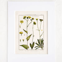 1: Vintage botanical print with white mat. Print features green and yellow leaves and flowers.