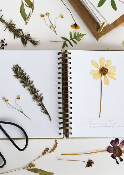Botanical Specimen Collecting Journal hover