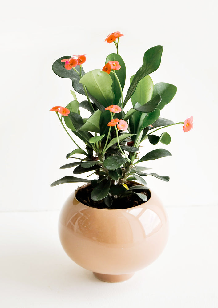 2: High Gloss Ceramic Planter in  - LEIF