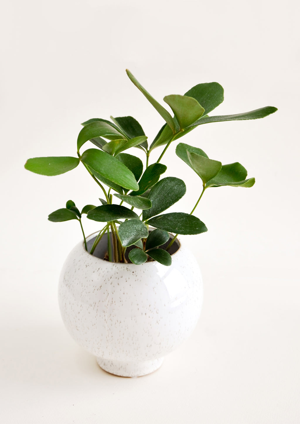 1: Kubrick Ceramic Planter in  - LEIF