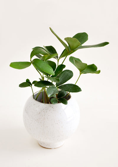 Kubrick Ceramic Planter in  - LEIF