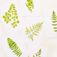 2: Fern Print Postcard Set in  - LEIF