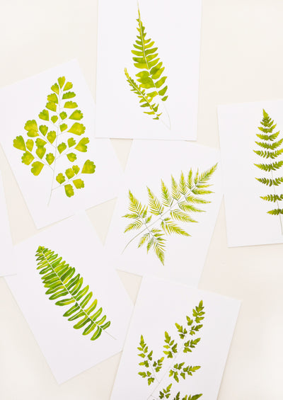 Fern Print Postcard Set