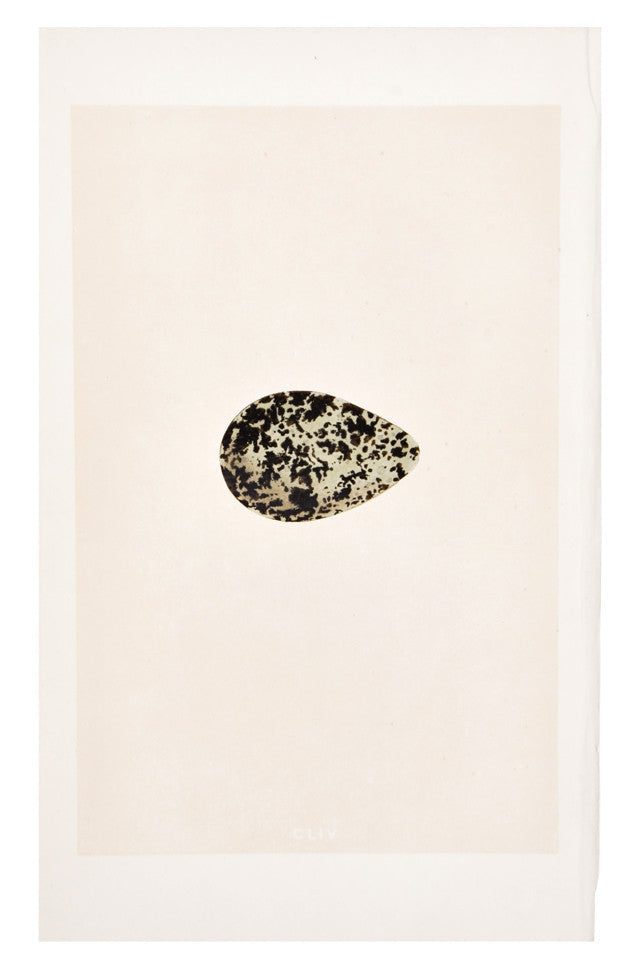 Moss Speckle Egg Print, c. 1876 - LEIF