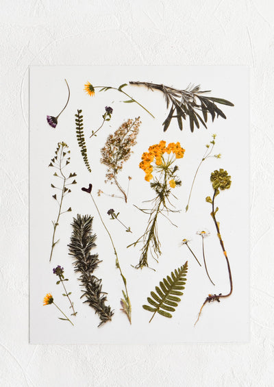 A digitally printed art print of pressed wildflowers and olive sprigs on white background.