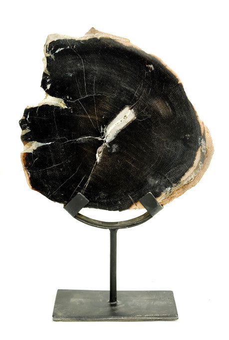 Petrified Wood Curio - LEIF