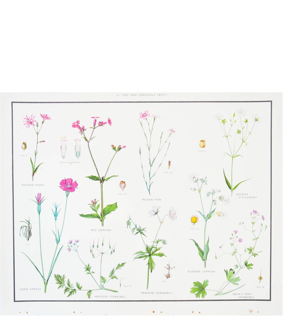 Pink & Cranesbill Family Print, c. 1927 - LEIF