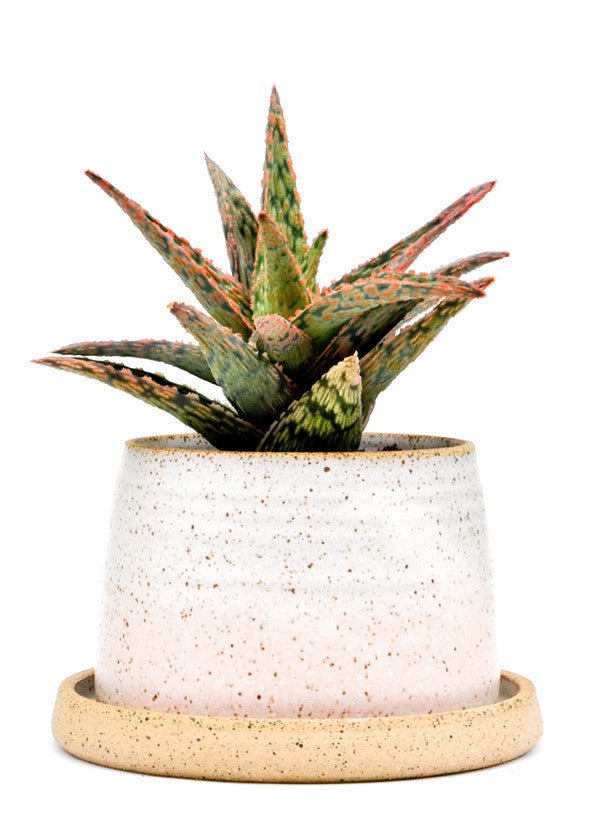 Speckled Gradient Planter - LEIF
