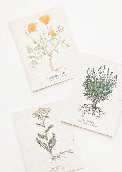 Wildflower Seed Paper Card hover
