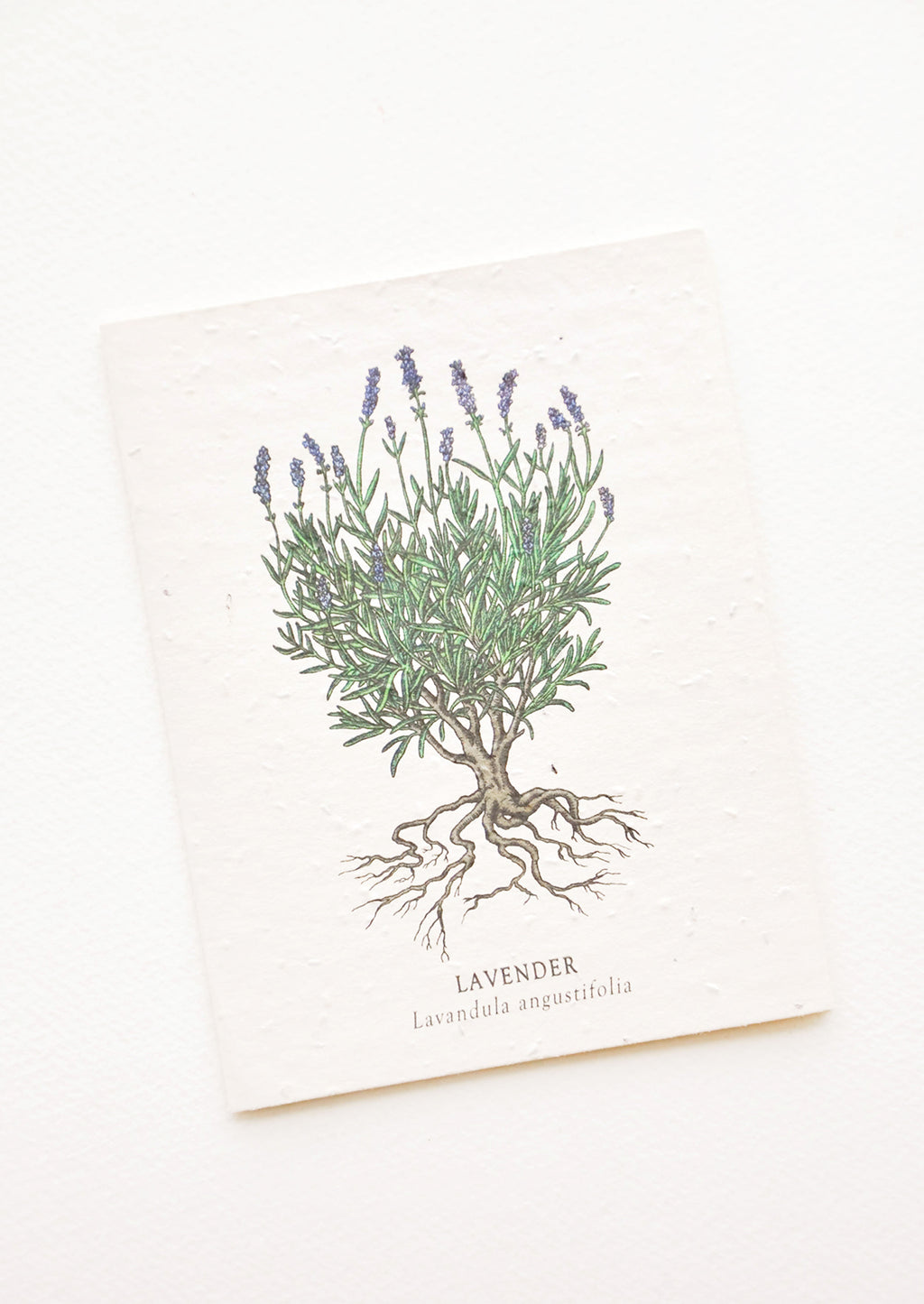 Lavender: Notecard with drawing of a lavender plant.