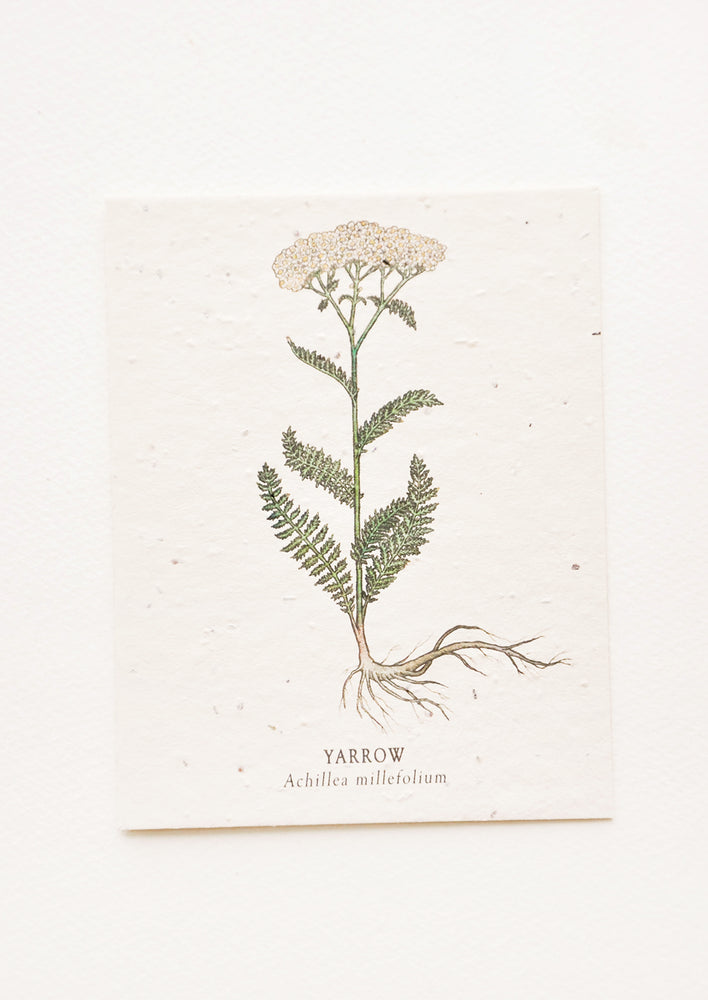 Yarrow: Notecard with drawing of a yarrow flower.