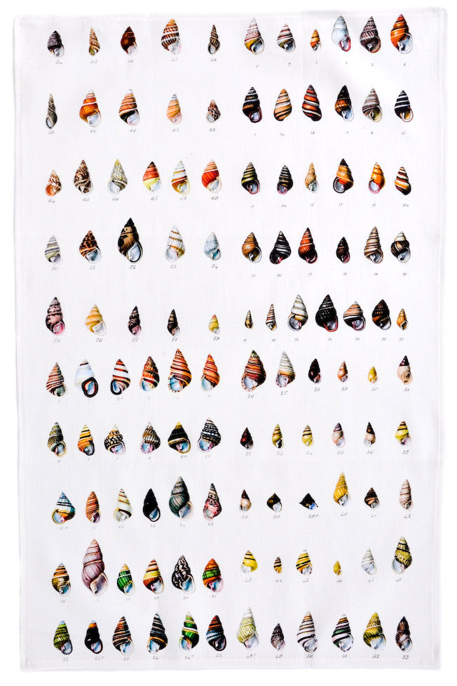Shells Tea Towel - LEIF