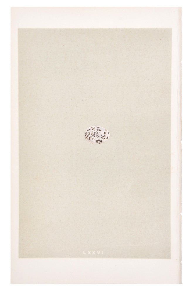 Single Small Egg Print, c. 1876 - LEIF