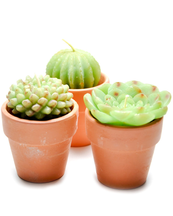 Potted Succulent Candle Set - LEIF