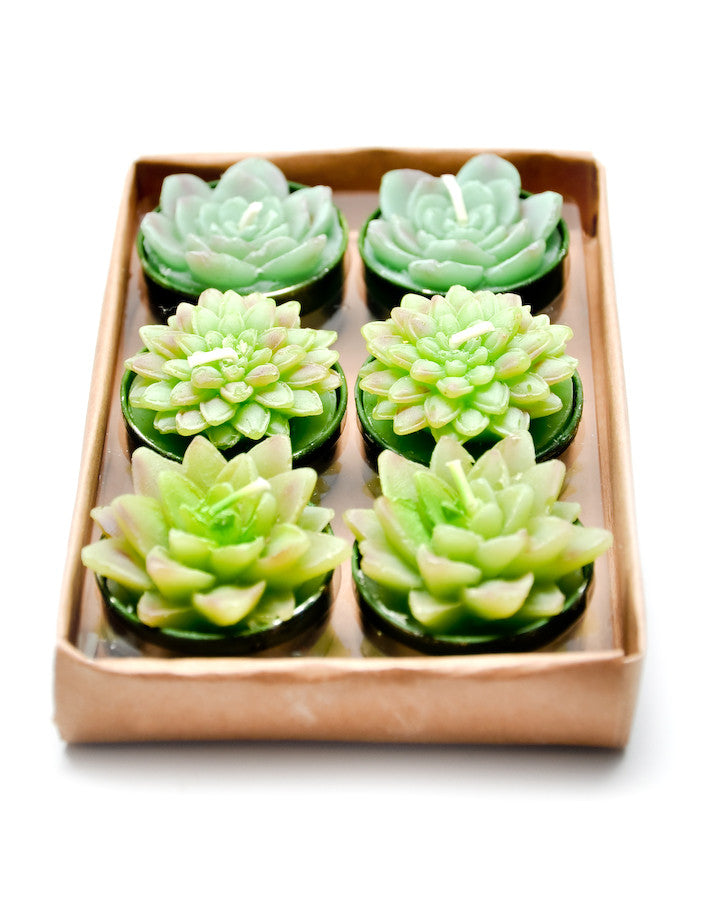 Succulent Tealight Set - LEIF