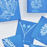 1: Sunprint Notecard Set in  - LEIF