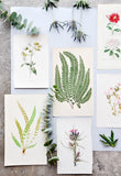 Vintage Flowering Plants Print, Sundew