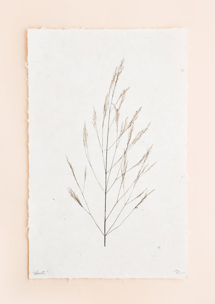 1: A black and white photograph of a stalk of wheat in black and white done on rough edged paper.