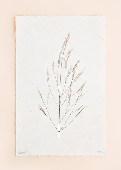 A black and white photograph of a stalk of wheat in black and white done on rough edged paper.