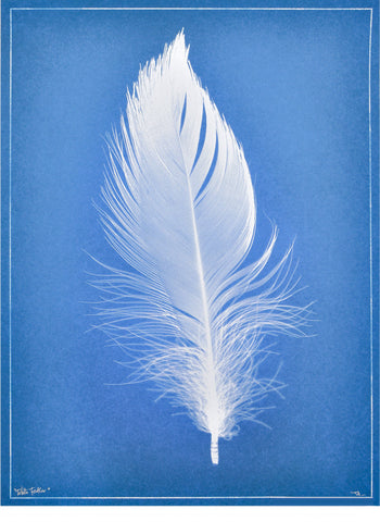White Feather Cyanotype Print