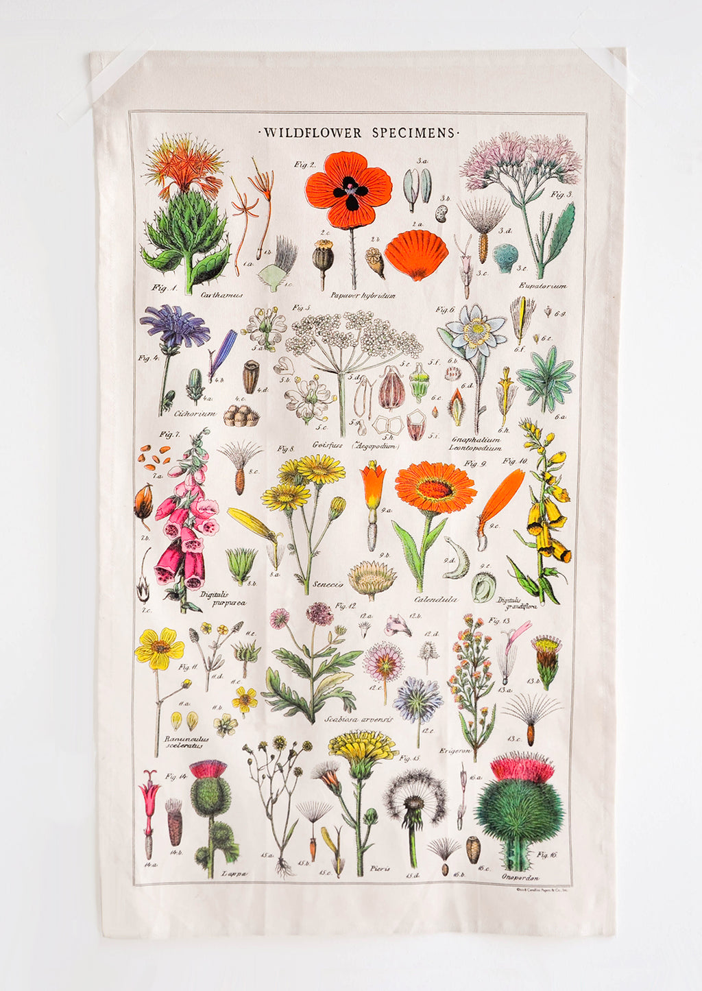 3: Wildflower Species Printed Cotton Tea Towel - LEIF