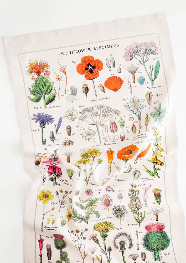 1: A cotton tea towel with botanical wildflower species printed in color.