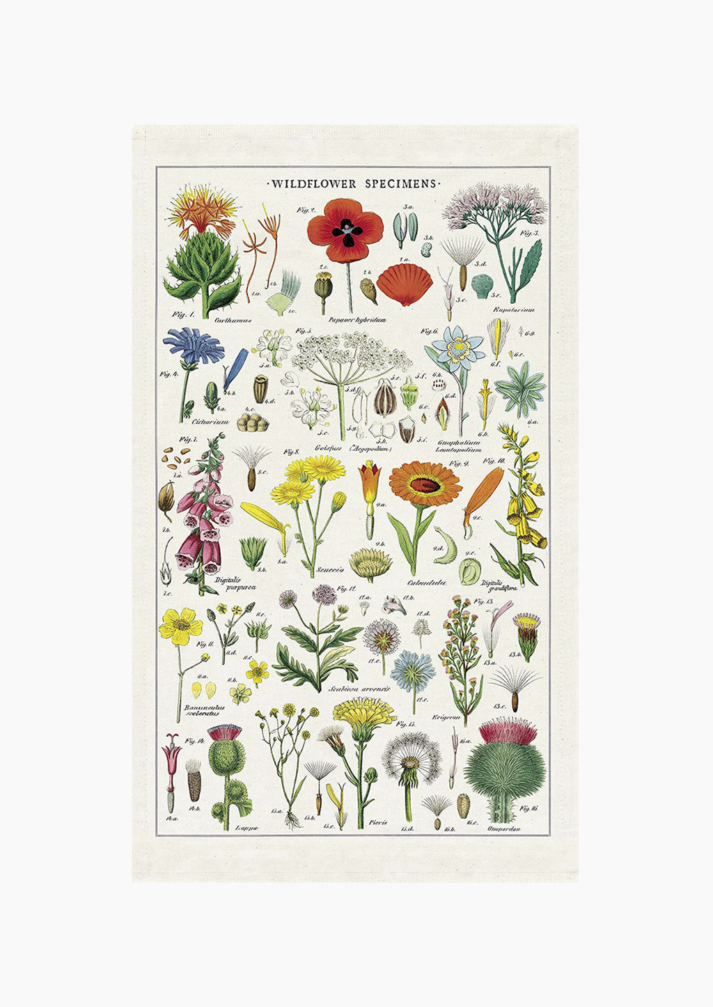 2: A cotton tea towel with botanical wildflower species printed in color.