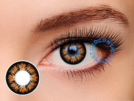 Geolica Holicat Cutie Brown XHC504 - Geo Contact Lens