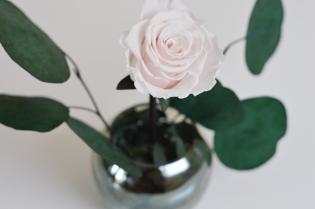 Single Rose with Eucalyptus