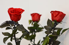 Load image into Gallery viewer, Classic Bouquet (Set of 3 long stemmed roses)